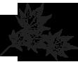 단풍잎 일러스트