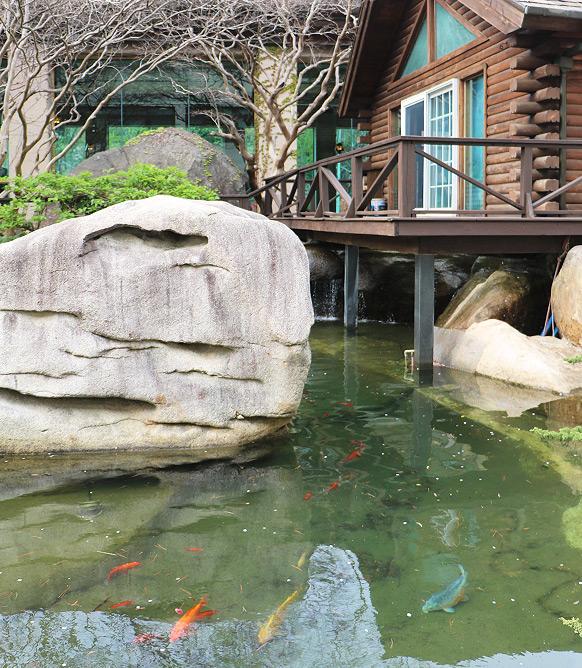 연못 사진