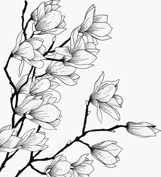 꽃 일러스트